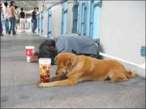beggar-and-dog-praying