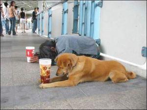 beggar-and-dog-praying